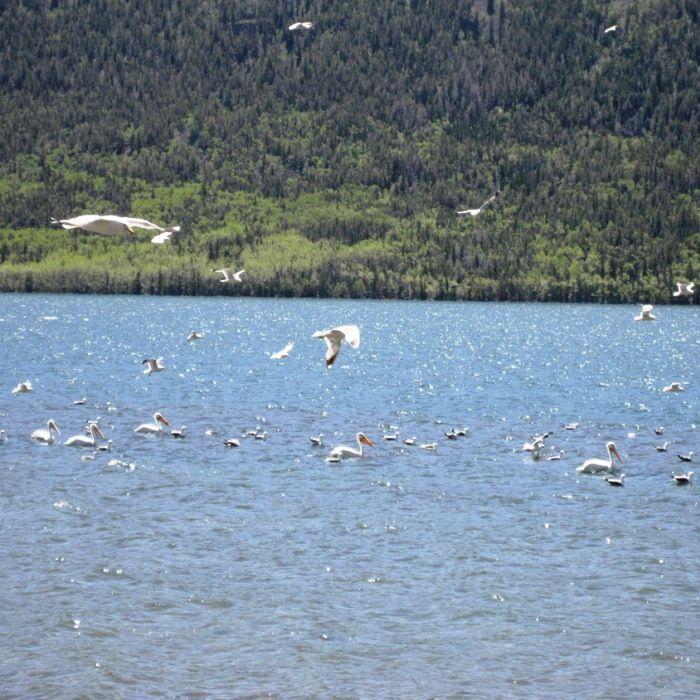 Fish lake utah utah the land i love pinterest for Fish lake utah