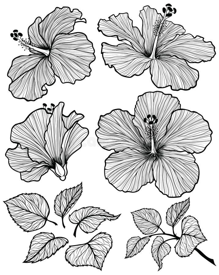 Photo About Hibiscus Flower Graphic Head Set With Leaves