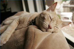 Your cat can rest easy with natural flea control.