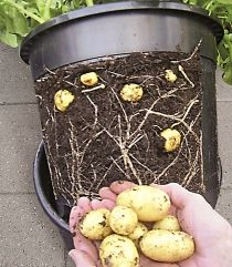 If you have a bunch of pots left over from gardening (or even going to purchase a few to do this) how easy would it be to make your own version of this potato pot!??!?!