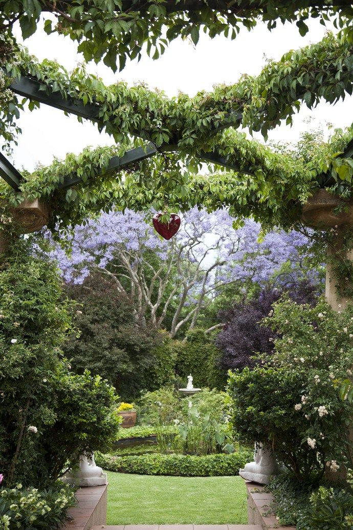 Architect Minky Lidchi's garden in Houghton, Johannesburg. Jacaranda in flower beautifully framed.