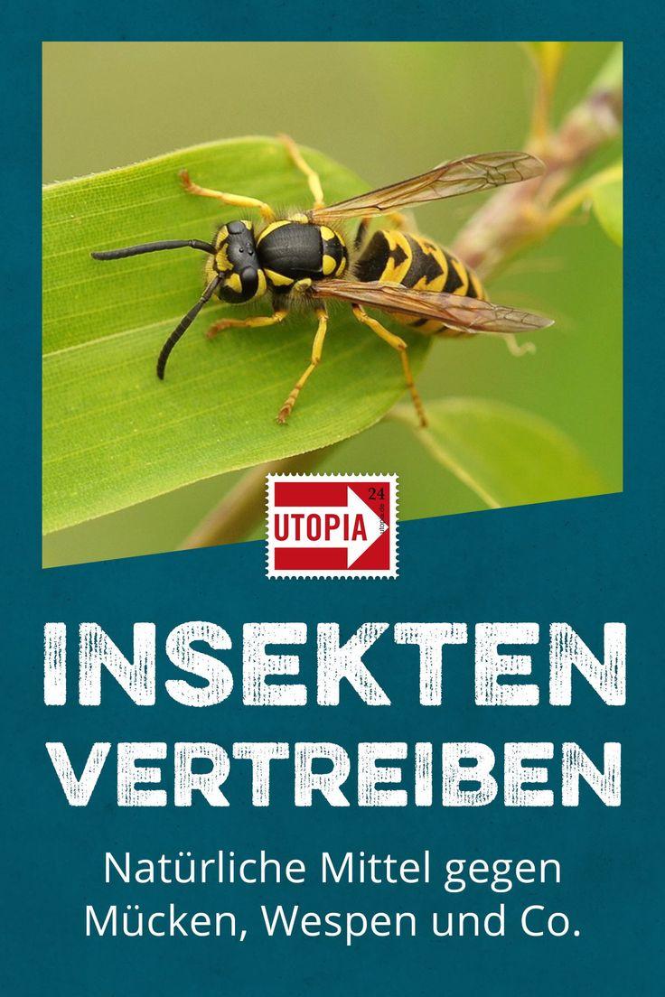 insekten vertreiben nat rliche hausmittel gegen m cken. Black Bedroom Furniture Sets. Home Design Ideas