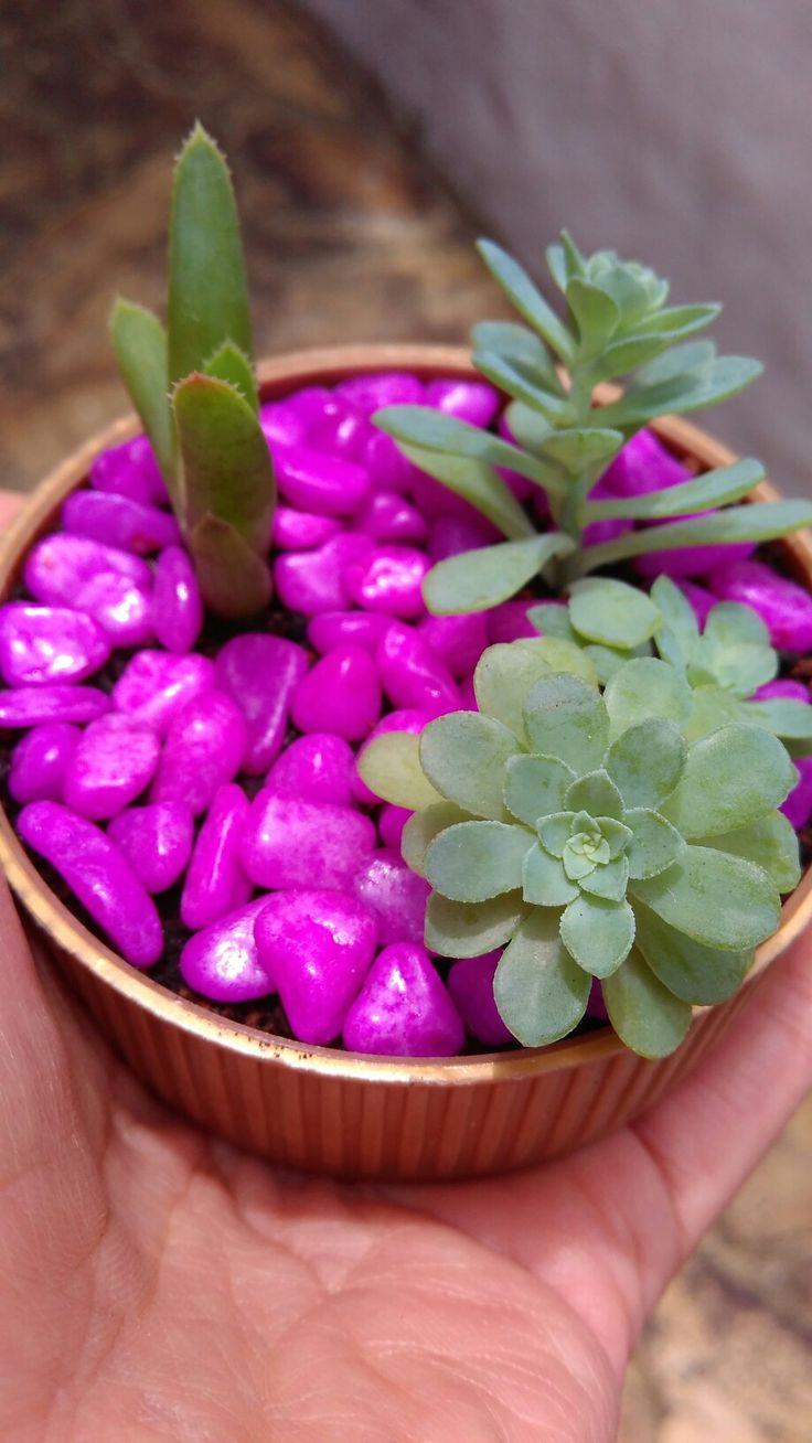 Mini terrario en tapa de plástico con suculentas