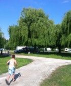 Elagage des Saules au camping - CAMPING ***LE GUE - CHEMERY 41