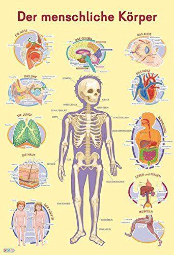 Mein Lernposter: Der menschliche Körper von Marc Robitzky https://www.amazon.de/dp/3845501332/ref=cm_sw_r_pi_dp_x_kzFRxb8CJ753H