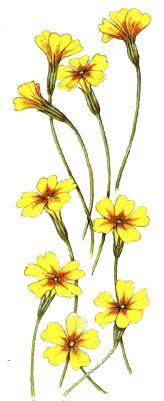 Operagastro > Ricette coi fiori: Crepes alle primule.