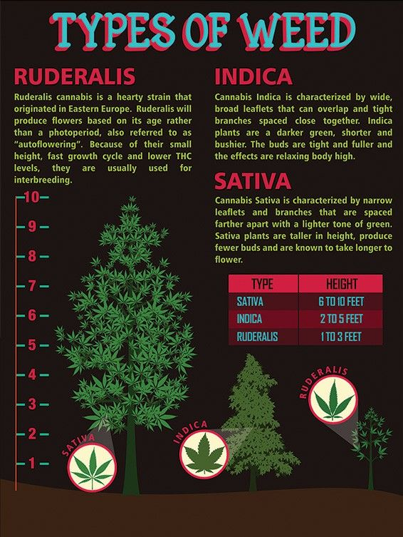 Hmm Nice To Know Indica Please They Always Ask Me Which I