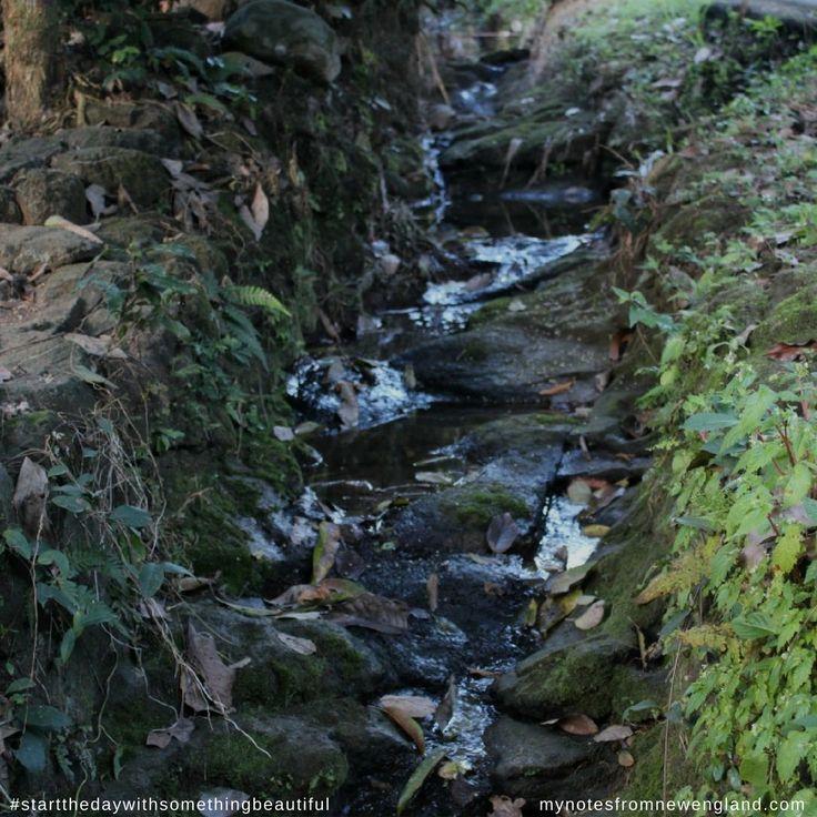 Love the little random creeks we come across #startthedaywithsomethingbeautiful