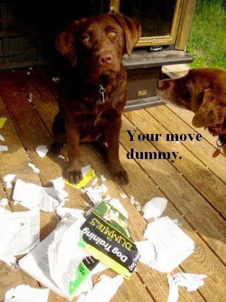 don't mess with a smart dog.....Dogtraining, Dogs Training, Book Title, Dog Training, Humor, So Funny, Labs Puppies, Chocolates Labs, Animal