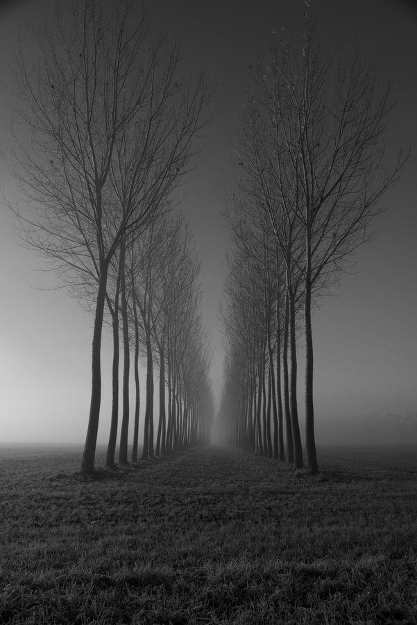 FOGGY TUNNEL by Riccardo Alù, via 500px