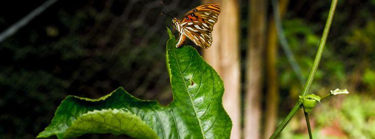 Fotografia Web | WildWeb@creative #PhotoArt #Web  #Nature #butterfly