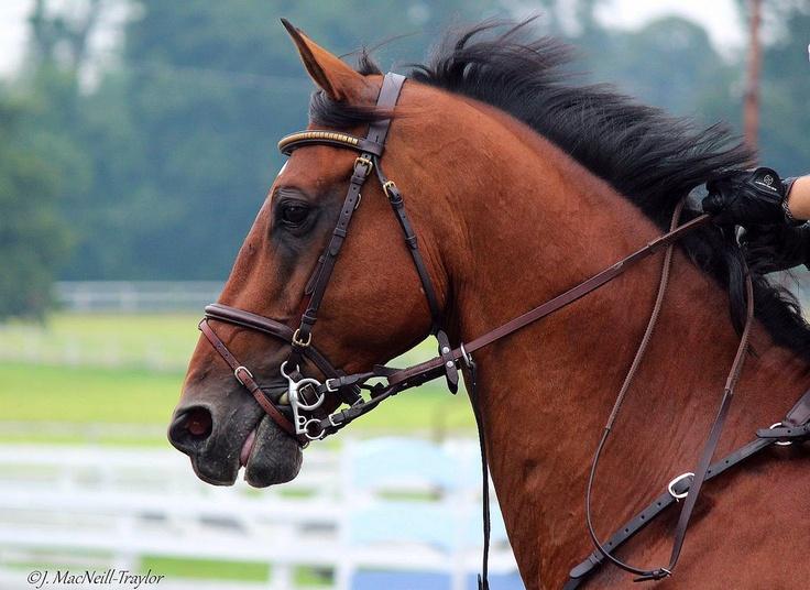 a beautiful bay horse