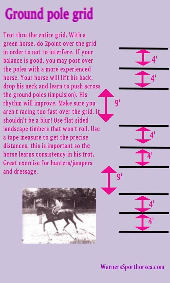 Exercise for the green horse