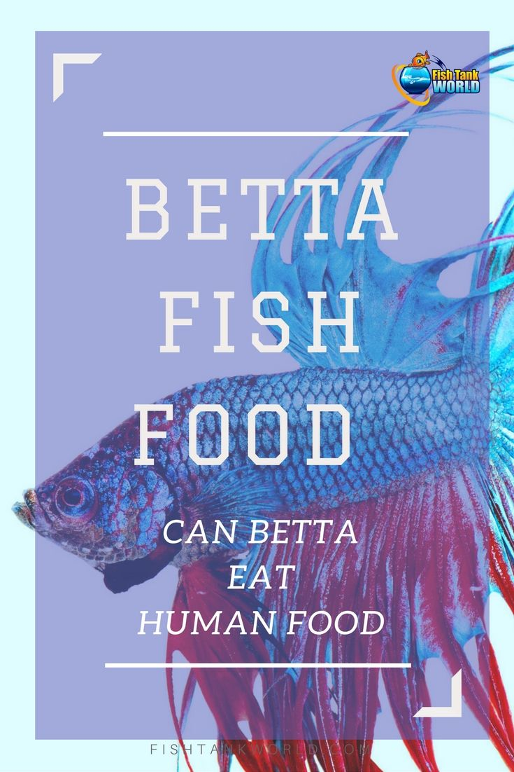 Pellets, flakes, live food, frozen food … it's a topic that Betta owners love to discuss.  When it comes to betta food, one of the topics that often comes in for controversy though, is whether Betta fish can eat human food. Can Betta Fish eat peas, fruit and meat and is it safe to feed your betta fish with this food?