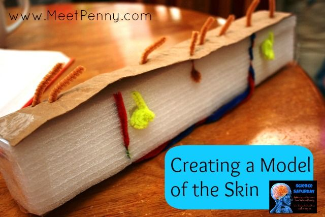 Studying the skin in a human anatomy unit lesson. Make a model of the skin from rescued trash!