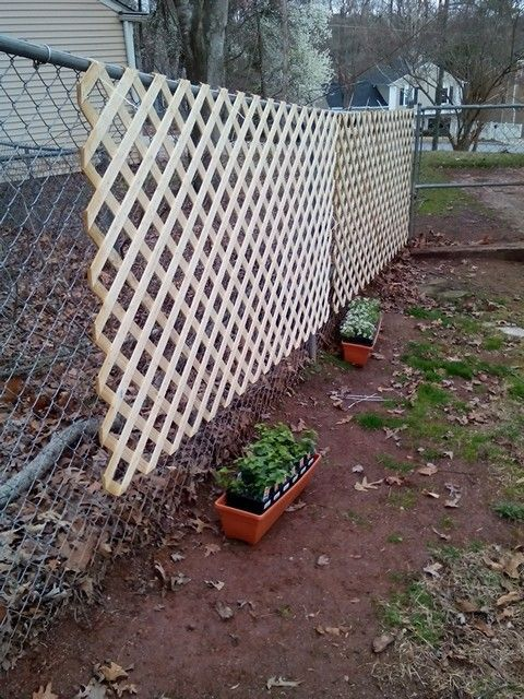 Lattice Yard Ideas Google Search Yard Pinterest