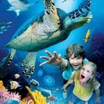 Turistattraktion London Sea Life Aquarium ARTE Udland - billetter til sport og underholdning i hele verden