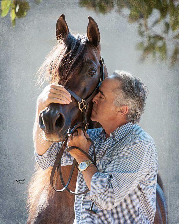 Mejores 1144 im genes de arabians en pinterest caballos rabes caballos y bellos caballos rabes - Persianas esparza ...