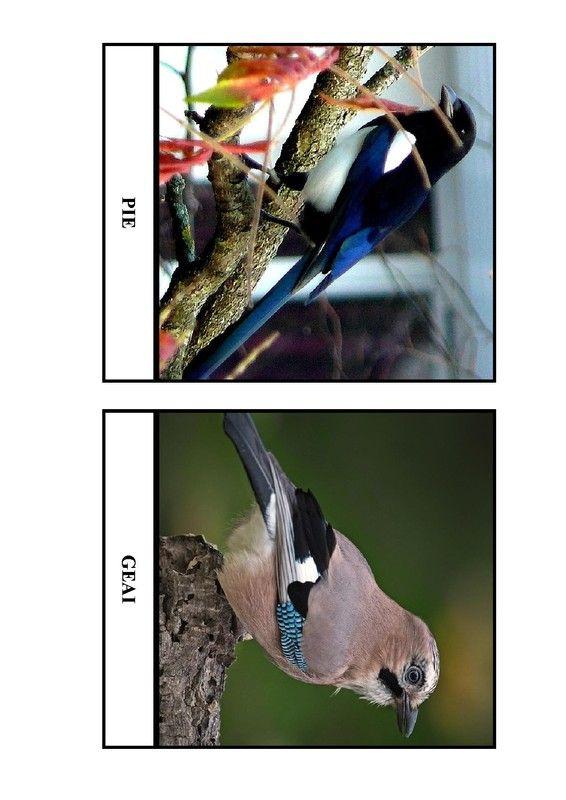 Imagier des oiseaux de chez nous - Page 5