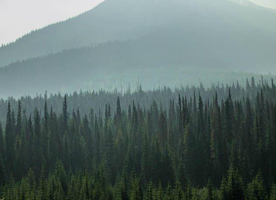 @InShoesOfM: Woodland Art Scandinavian Art Scandinavian Print Landscape