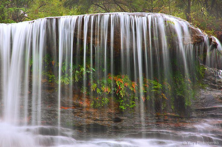 Weeping Rock Waterfall, Wentworth Falls, Blue Mountains, Australia by Yury Prokopenko
