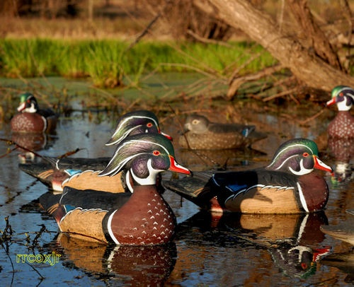 Avery Greenhead Gear GHG Pro Grade Wood Duck Decoys New | eBay