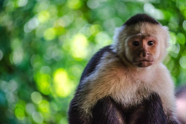 Costa Rica has banned the hunting of wildlife, thanks in part to Facebook and ecotourism! @Conservation International