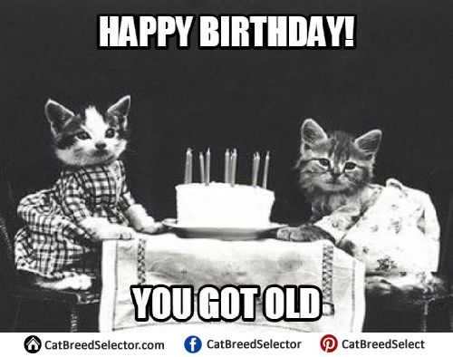 Happy Birthday Cute Meme ~ Best images about funny cute angry grumpy cats memes on pinterest