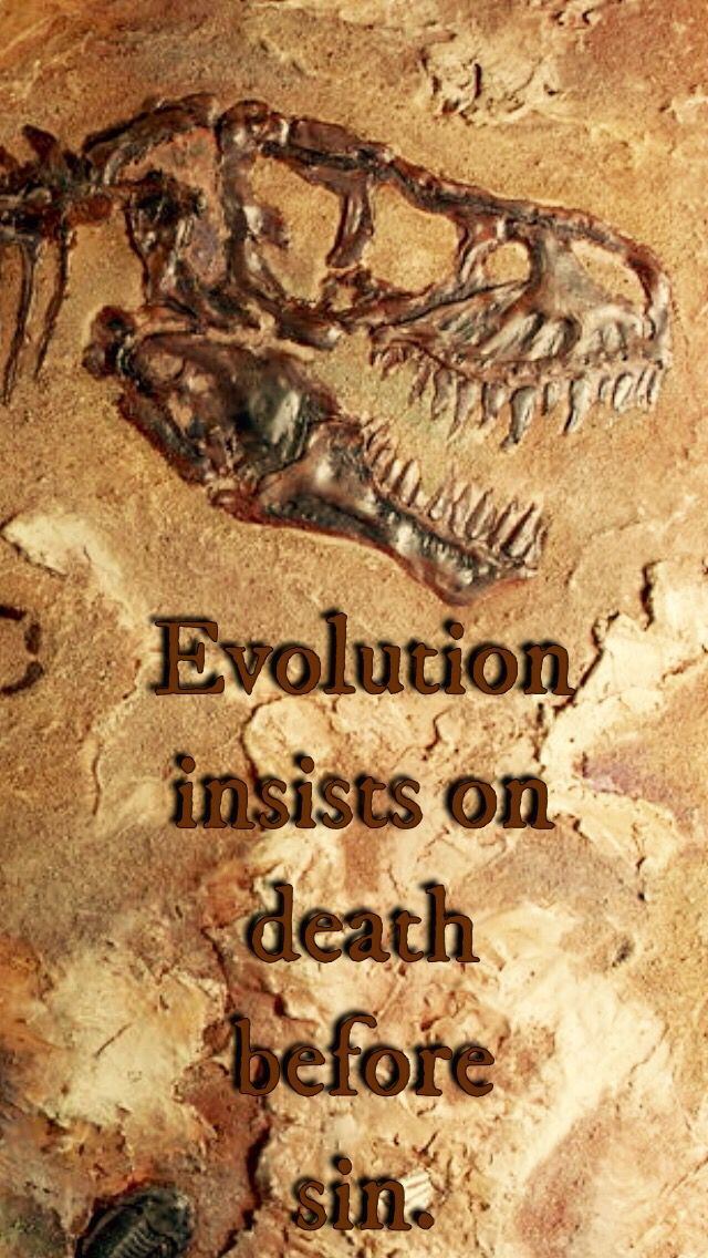 how to tell if evolution has occurred