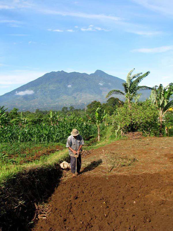 Mengolah tanah, Rancamaya, Bogor