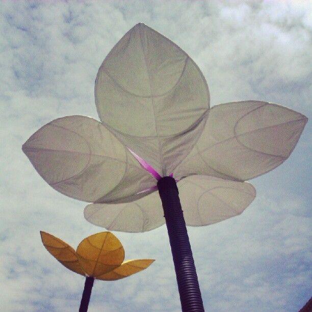 "AriadnaCasanovas foto ""Flors al vent"""