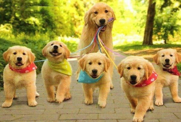 Colorful family