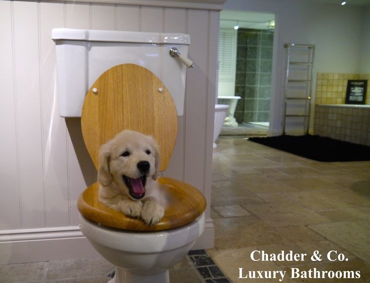 What a lovely little visit today from Chadder & Co's very own Andrex Toilet roll adverts top model. wink emoticon #puppy #cute #luxurytoilet #andrex #chadder