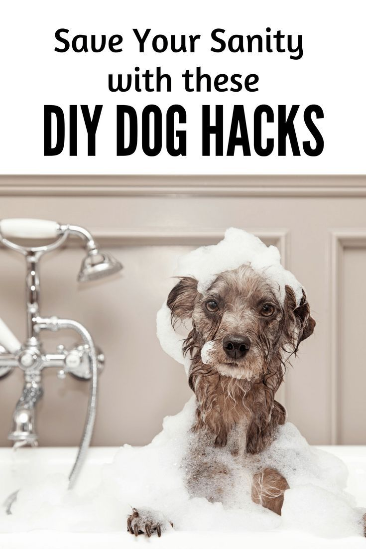 These Dog Hacks Will Save Your Sanity Newpuppy Dogtraining