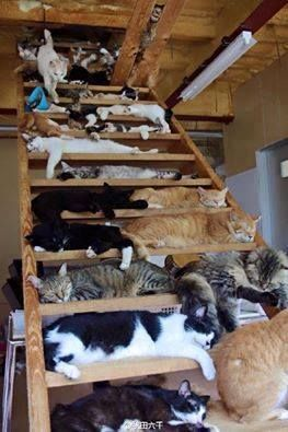 """* * KITTEH ON TOP: """" Onlys another cat coulds getz down deese stairs. Dis place beez haunted so nobodys lives here."""""""