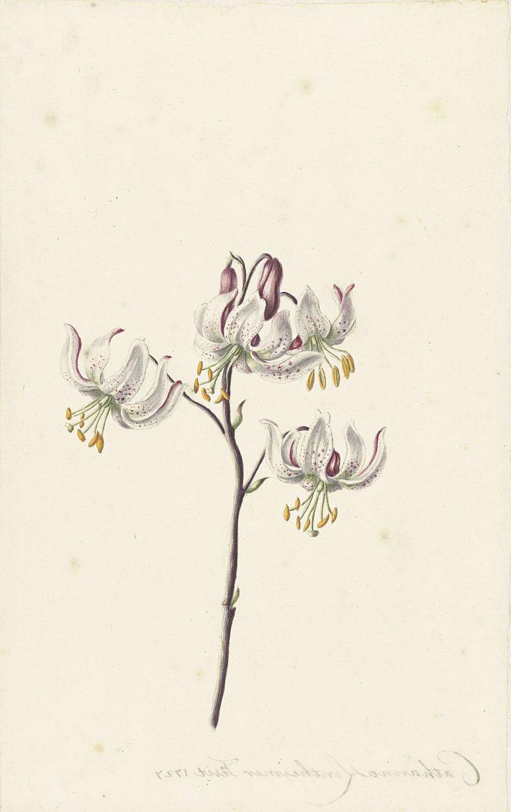 Catharina Lintheimer | Takje met vier witte lelies, Catharina Lintheimer, 1727 |