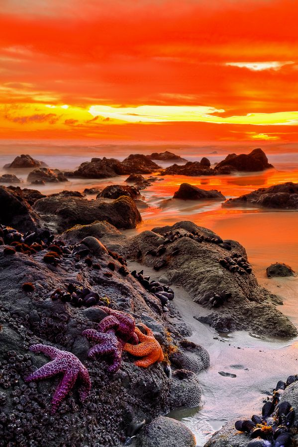 Sunset sunrise over rocky water's edge with starfish in foreground  ~~Star Gathering by Greg Clure~~