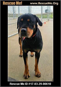 ― Illinois Rottweiler Rescue ― ADOPTIONS ―RescueMe.Org