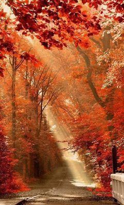 ΚΑΚΑΛΟΠΟΥΛΟΥ ΓΕΩΡΓΙΑ: Άνοιξη και Φθινόπωρο