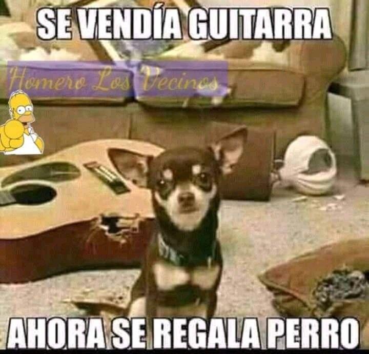 Pin De Miyarahi En Firulais Funny Adopcion De Perro Perros Regalo Perro