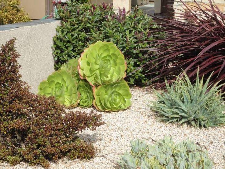 17 Best Ideas About Pflanzen Für Steingarten On Pinterest ... Pflanzen Fur Steingarten Tipps Auswahl Pflege