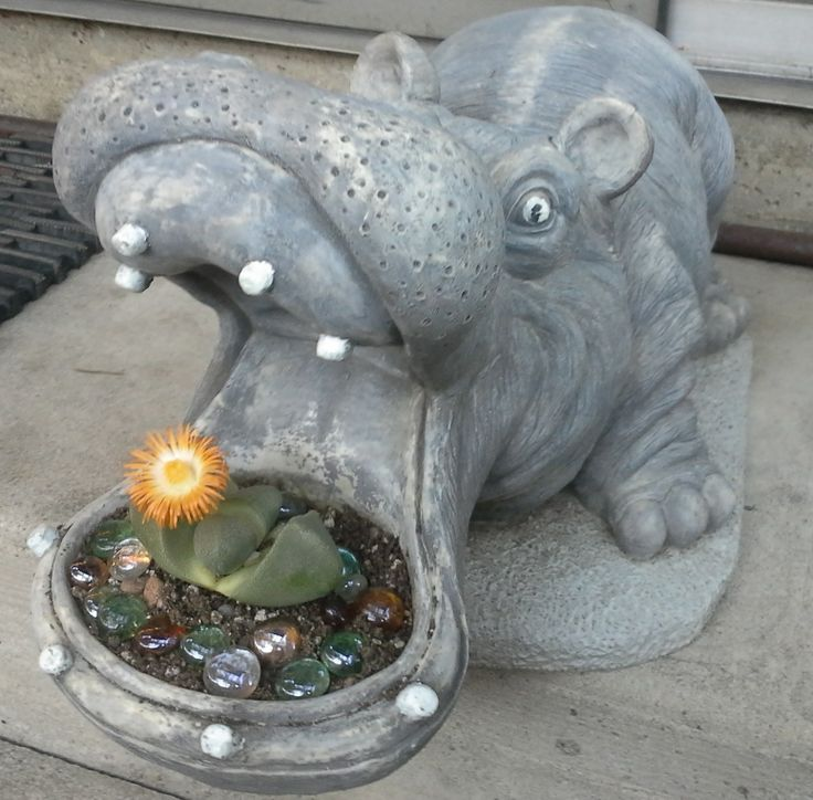 """I have had this hippo for years.. I just love figuring out what little succulent will work best when I decide to replant it... I thought this """"living stone"""" worked."""