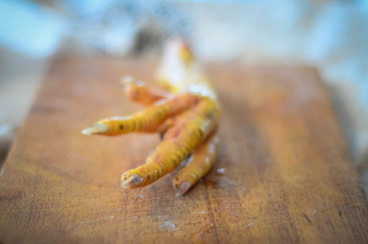 A chicken's foot, freshly harvested   The Elliott Homestead Chicken Feet: Why you need them in your diet and how to prepare them!
