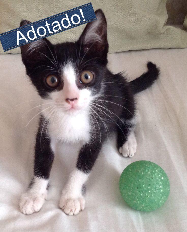 Meu nome é Lucky, tenho 2 meses, sou carinhoso, gosto muito de um colinho e adoro ficar com crianças. Estava morando na rua, mas fui resgatado e vacinado, agora preciso de um lar bem amoroso como o seu! Para me levar para sua casa, é só clicar aqui: http://www.amigonaosecompra.com.br/pets/4379-lucky-gato-pequeno-macho-filhote-docil-brincalhao-sociavel-calmo-gatos-criancas-desconhecidos-casa-com-quintal-apartamento-vacinado-vermifugado-rj-rio-de-janeiro