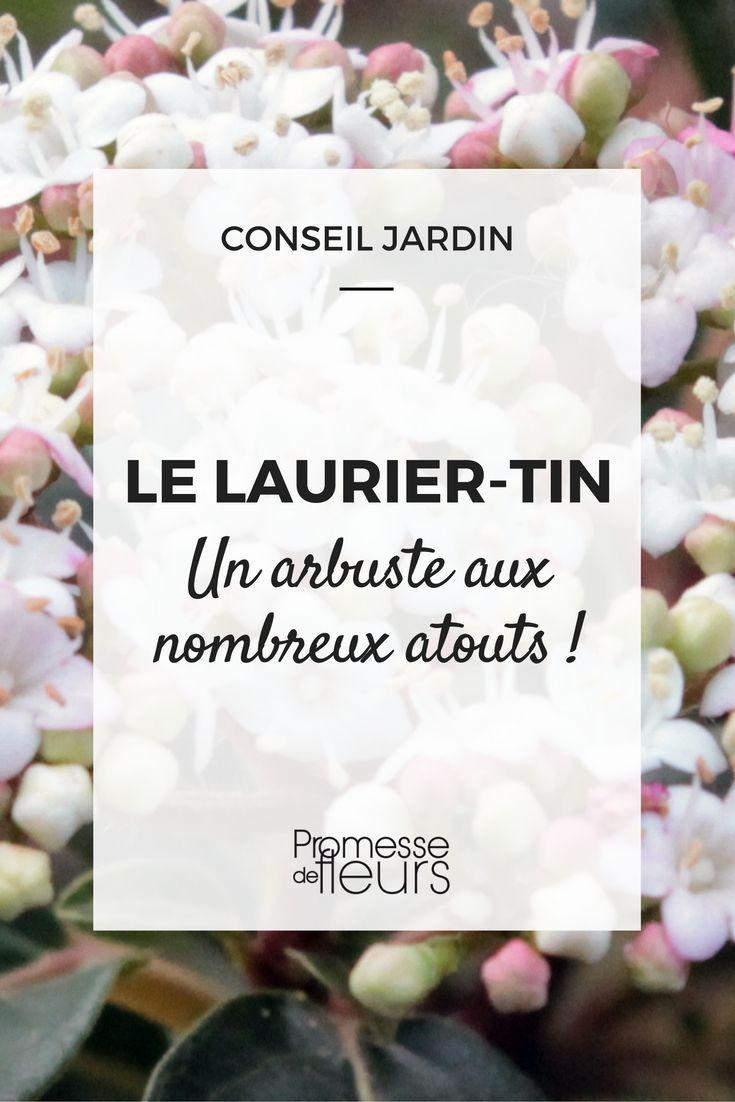 Taille Du Laurier Tin laurier-tin : un arbuste aux nombreux atouts | arbuste