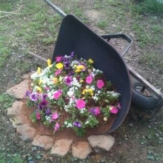 Wheel barrel planter! Love this, wheel barrel planters are becoming pretty common but the one that had an accident and fell over is unique.