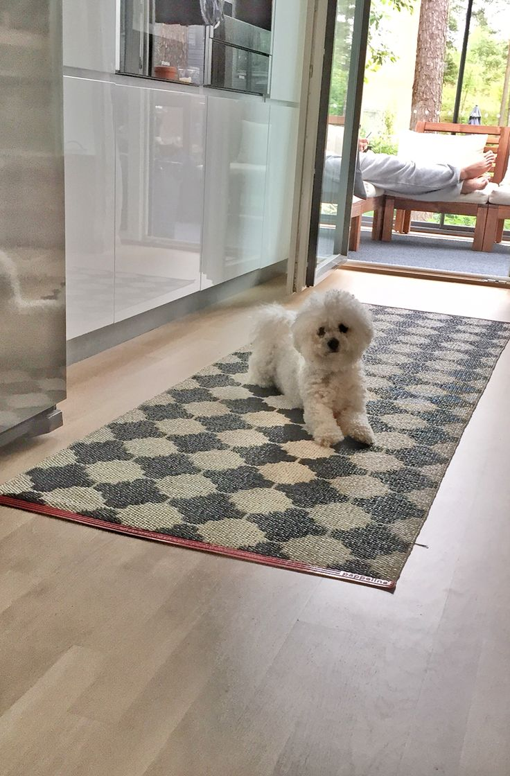 Our friend's dog in our kitchen (Kvik). Carpet from Pappelina.