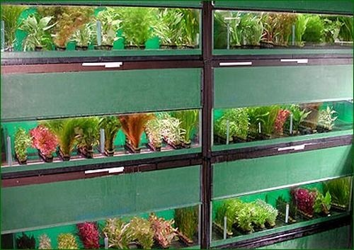 Reuse For Aquarium When Fish Are Gone Recycled For