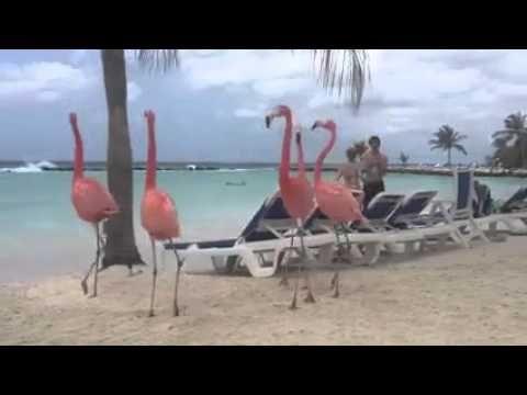 Фламинго на пляже - Flamingo on the beach