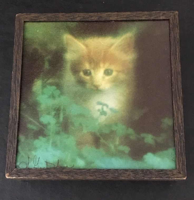 Cute Cate Shadowbox Picture Vintage Retro Mod 1970's Gary Dodson